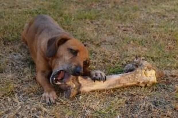 Чем кормить собак и кошек. Валерия Орлова