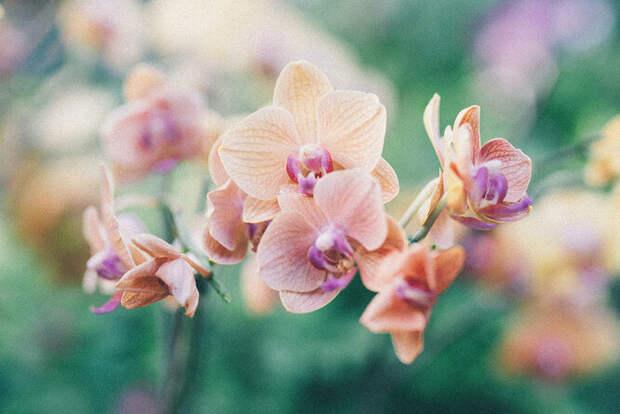 Простые советы по выращиванию орхидеи