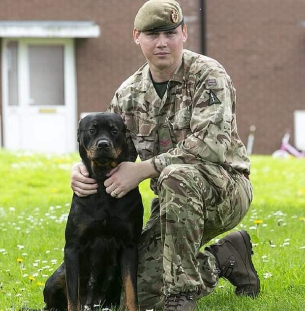 Мама-героиня: собака из Британии родила огромное количество щенков
