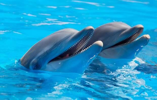 В Крыму попытаются распознать язык дельфинов Яши и Яны