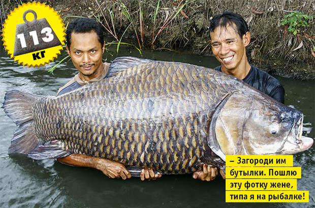 Фото №6 - Кто сказал «Вау!»: шокирующе огромные животные-переростки