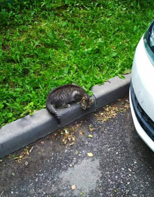 Жизнь на газоне, возле машин, до добра не доведëт! Пожалуйста, приютите девочку хотя бы на время!