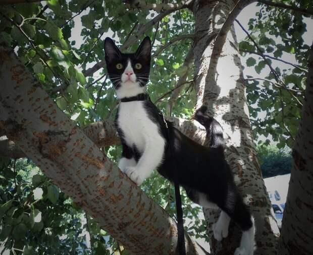 Котенок был таким худым, что можно было сосчитать его ребра. Дети таскали его по дворам, не давая покоя
