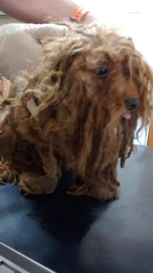 Дети грели своими рубашками несчастного пса! Но никто не заметил, что скрывалось под висящей шерстью…