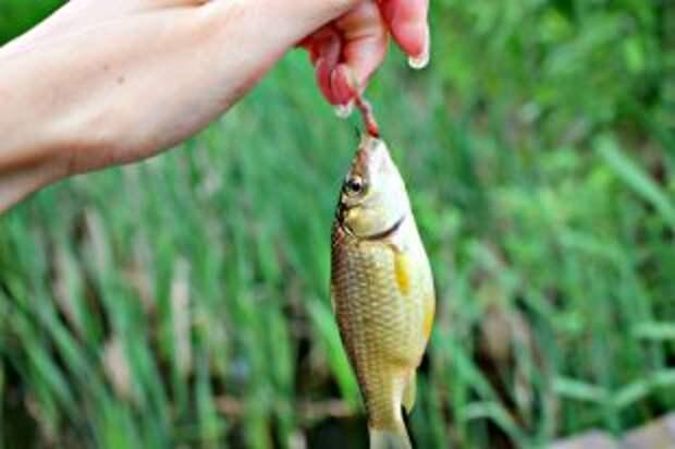 В какой рыбе больше всего витаминов?