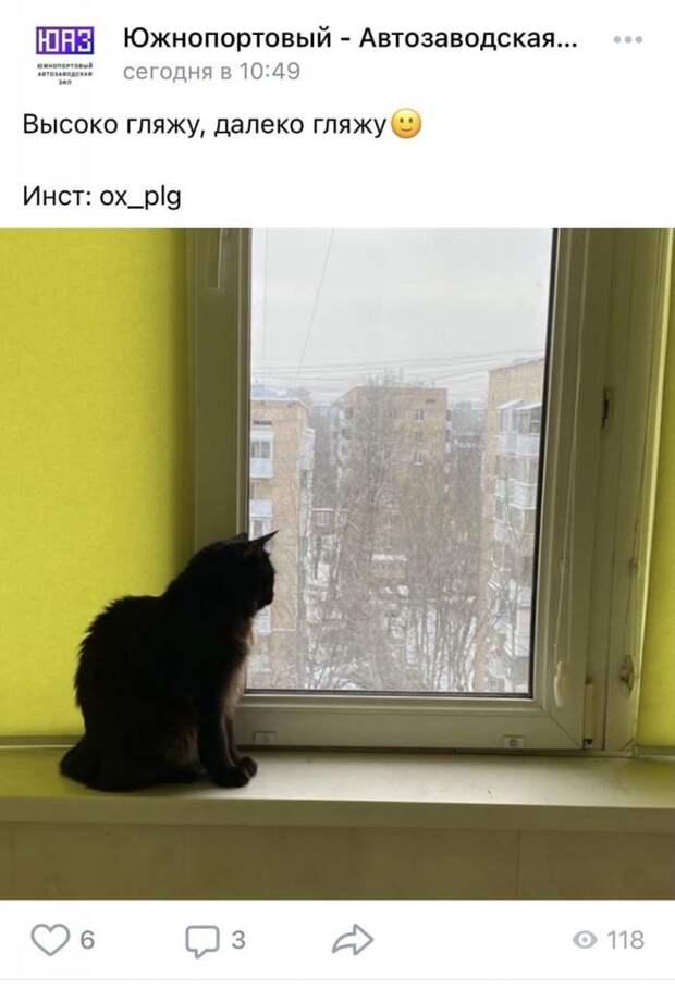 Фото дня: любопытный наблюдатель из Южнопортового