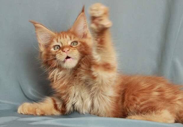 Смешные короткие истории о кошках из уст самих владельцев