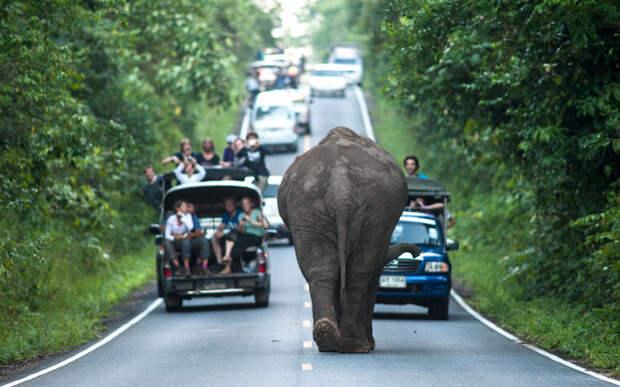 Национальный парк Кхао Яй, Тайланд