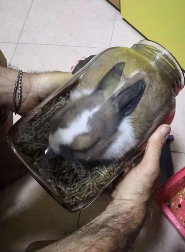 кролик в банке