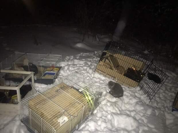 Жители Сургута нашли в лесу 28 кошек, запертых в клетках