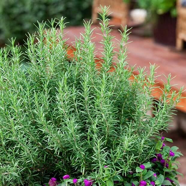 14 растений, которые лучше всех привлекают в дом положительную энергию