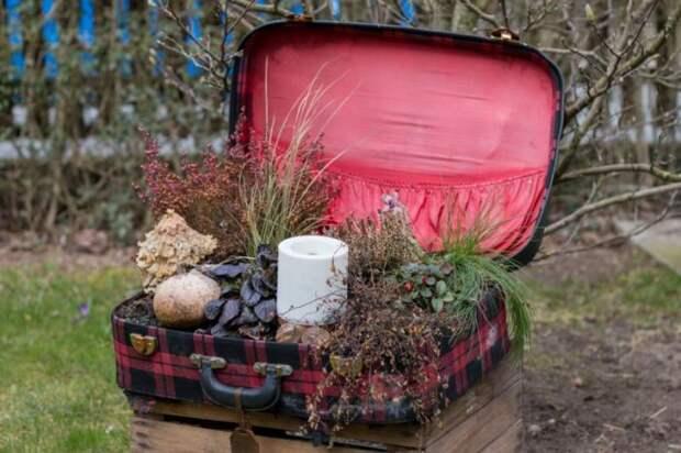 И даже из старого чемодана можно соорудить симпатичную клумбу.
