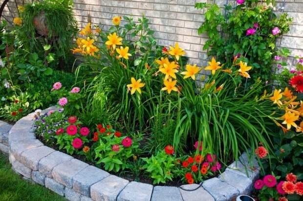 Растения для маленького сада лилейник