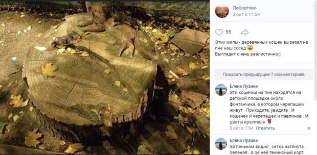 Фото дня: в лефортовском дворе поселились деревянные котики