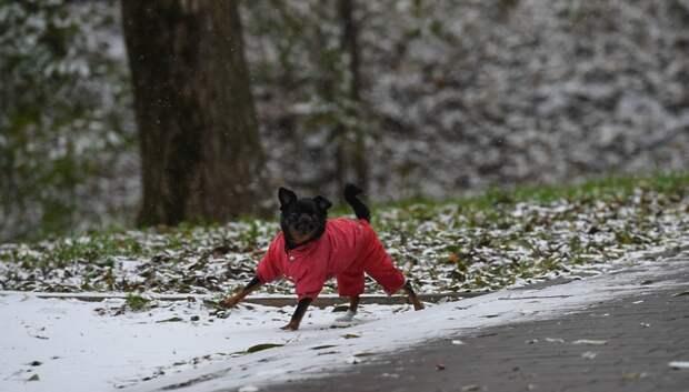 Снег и до минус 3 градусов ожидается в Подольске в среду