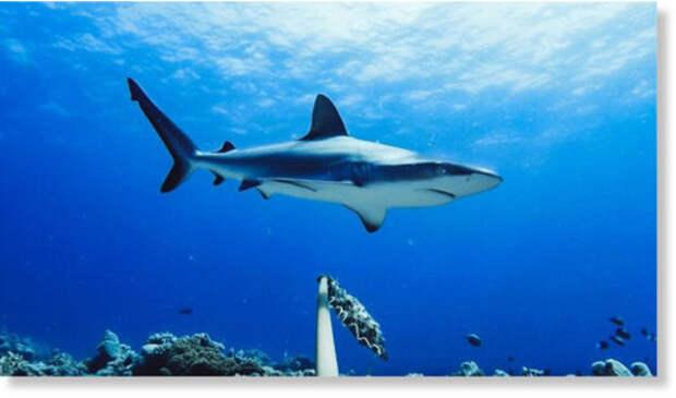 Ученые выявили тревожное сокращение популяций акул