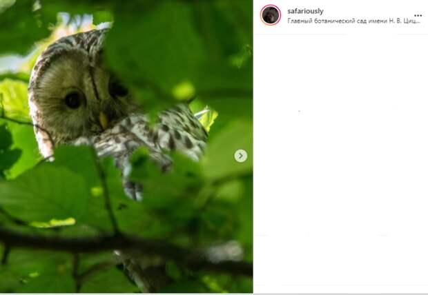 Фото дня: сова в Ботаническом саду спряталась за листьями