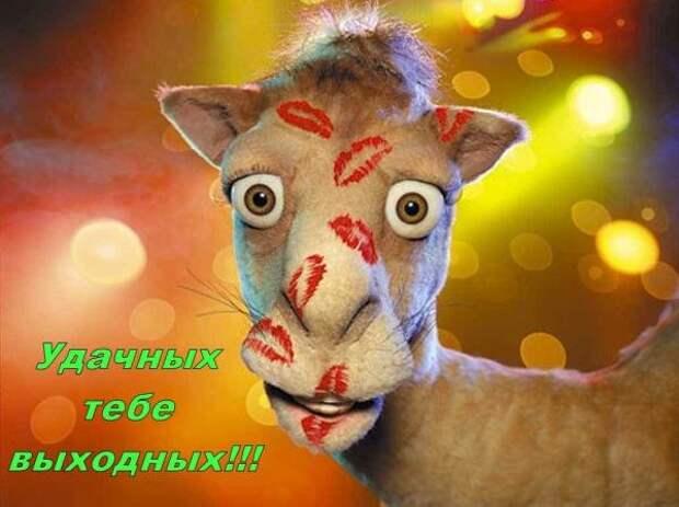 С концом вас....)))))))))))))