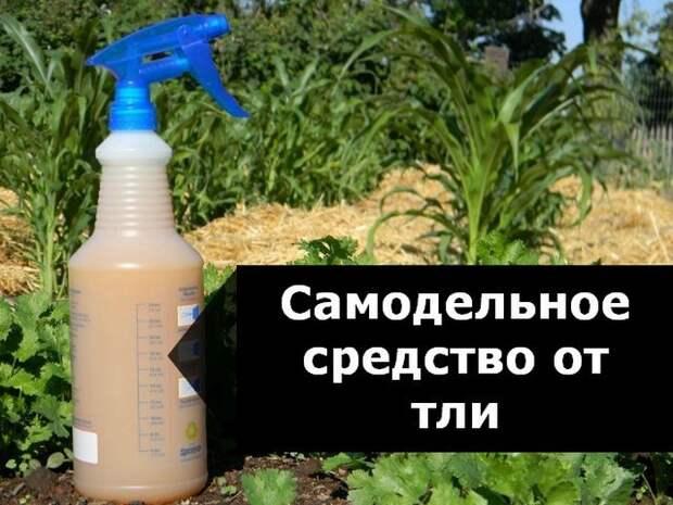 Эко-пестицид на основе мыльного раствора.