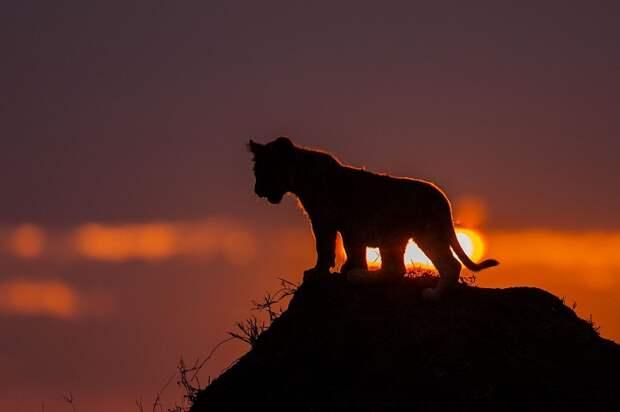 afrikanskie zakaty 0 Потрясающие африканские закаты от Пола Гольдштейна