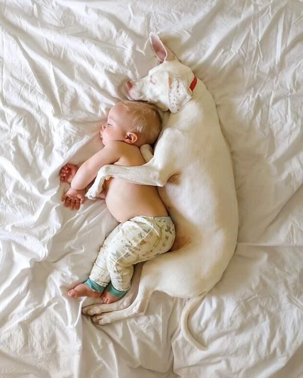 Как выглядит дружба маленького мальчика и собаки, которая перестала доверять людям