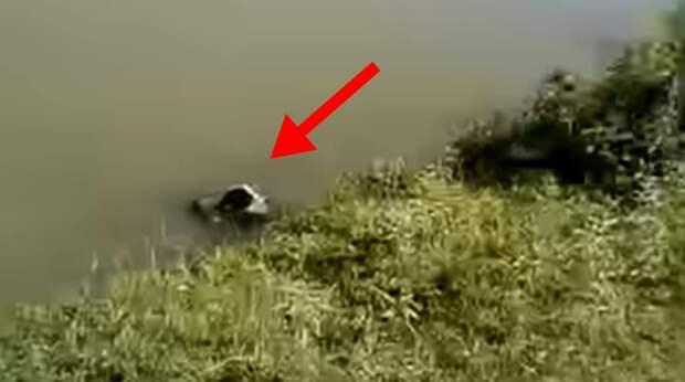 В бетонном канале барахтался пёс. Он потратил все силы, чтобы удержаться на плаву, а помочь было некому