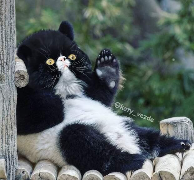 Как бы выглядели животные, если бы у них была кошачья мордочка? 15 фото