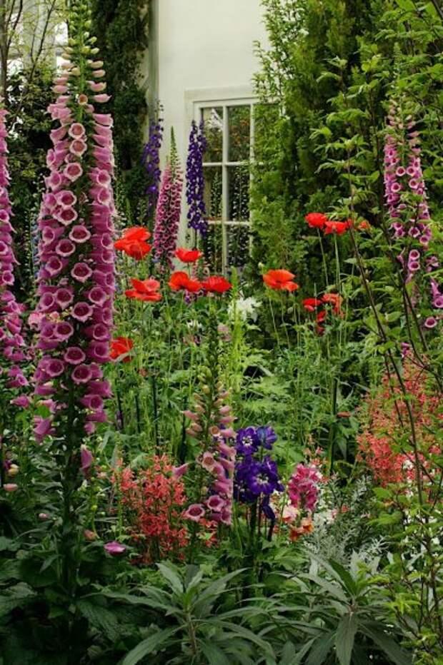 Цветы разной высоты