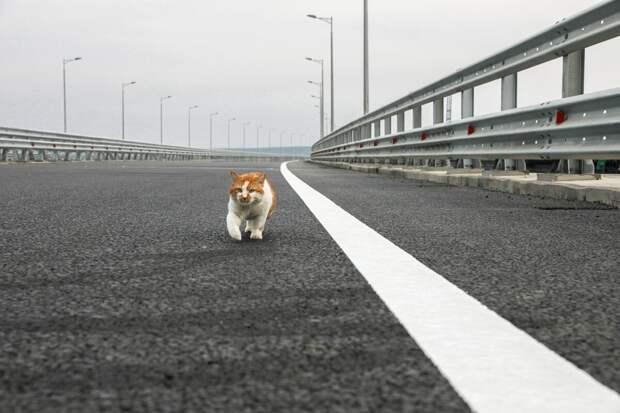 Крымский мост. Первый миллионный пассажир. Интересные факты.
