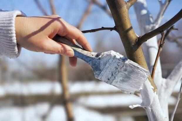 Советы на февраль для дачников. Рассказываю, что нужно сделать в феврале, чтобы весной и летом огород радовал.