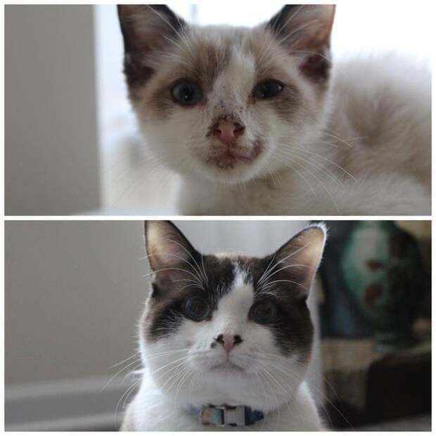 Десять фото котиков, которые сразу изменились в лучшую сторону, когда попали в хорошие руки