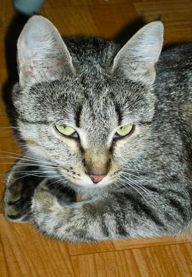 Возьмите в свой дом необыкновенную, душевную кошку! Вы ведь такую и ищете?!