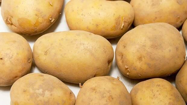 Юрист рассказал, когда за посадку картофеля могут оштрафовать