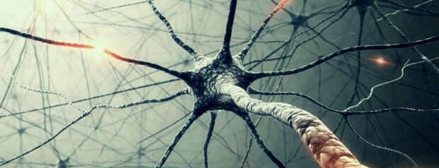 Рассеянный склероз: как возникает, как распознать, как лечить