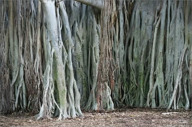 Уникальное дерево  людей в Индии