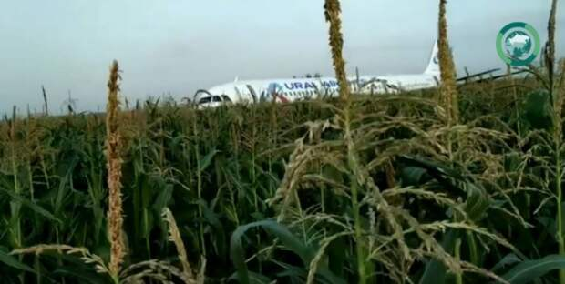 Бывший летчик оценил действия пилотов самолета  «Уральских авиалиний»