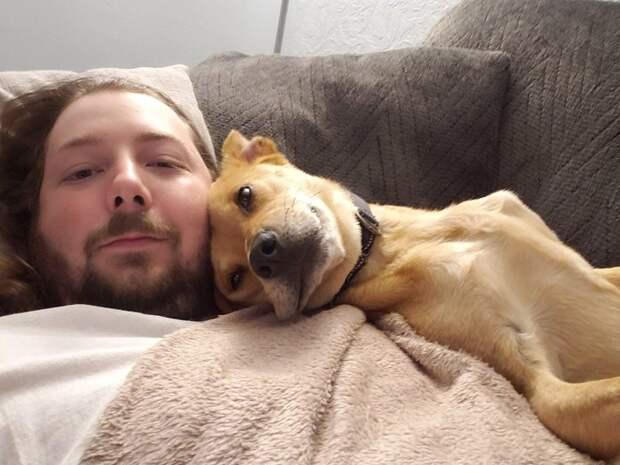 20+ доказательств того, что подарить бездомным животным новую жизнь — бесценно