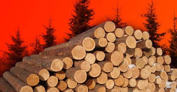 Вот что случится через 40 лет, если мы не прекратим вырубать леса
