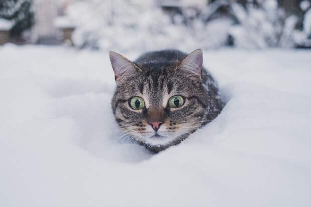 В Удмуртию на этой неделе вернутся холода