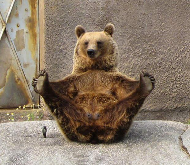 15 животных, которые занимаются йогой круче, чем ты