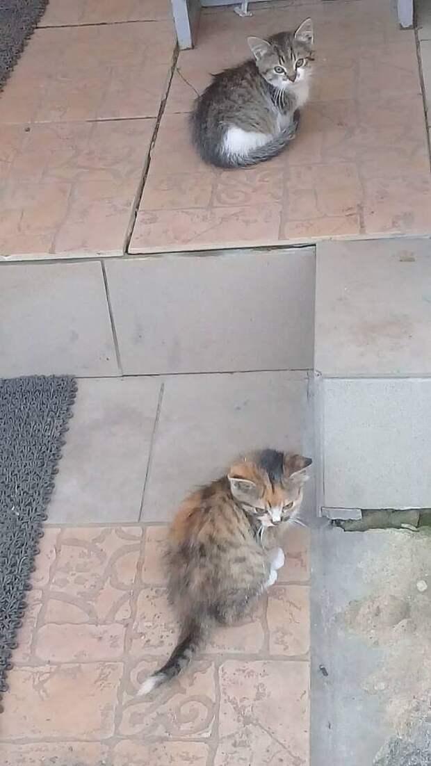 Кошка скрывала котят, пока те сами не вышли к хозяевам
