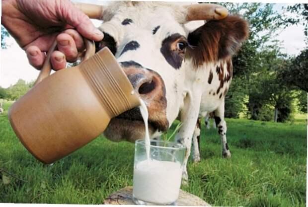 В России растет производство молока