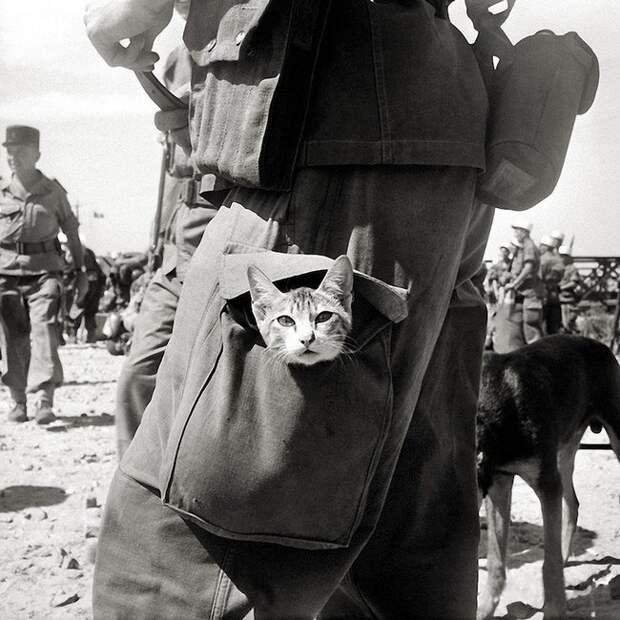 Кот в боекомлекте. Французский Индокитай, 1950-е гг. Весь Мир, история, фотографии