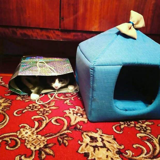 Скромный кот.
