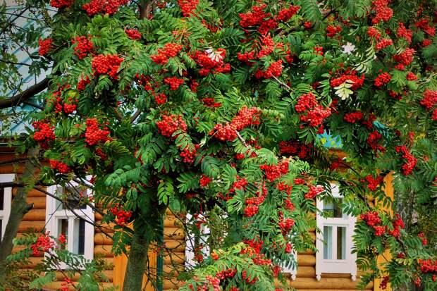 Лучшие деревья для вашего участка и двора