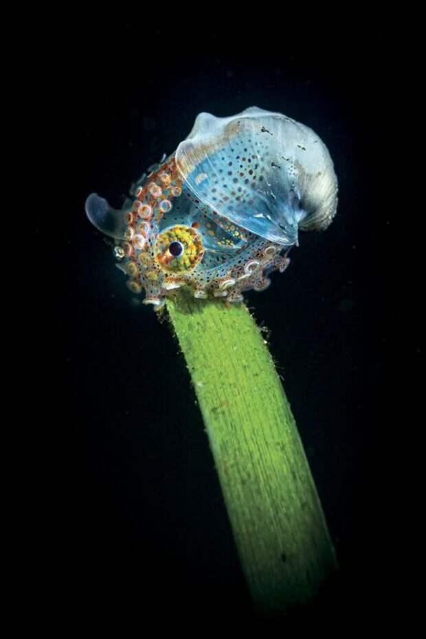 30 лучших работ отпобедители конкурса подводной фотографии Through Your Lens 2020