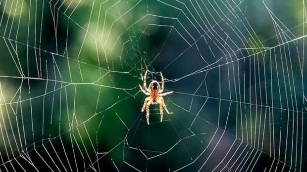 Трудно представить, что сон паука будет выглядеть как-то заурядно. На то он и паук