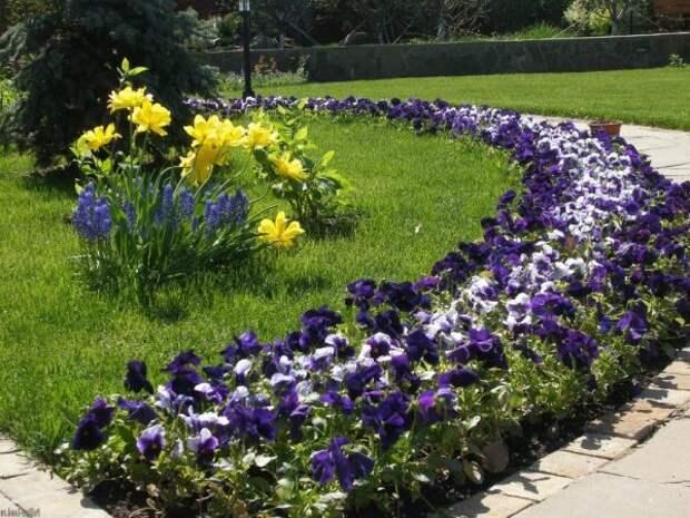 Цветник-бордюр вдоль газона