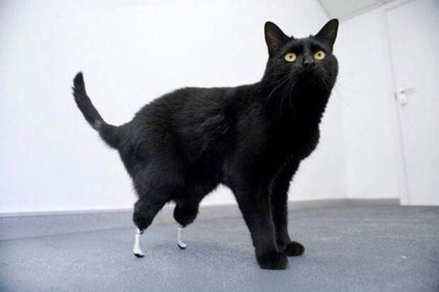 протезы для животных, животные инвалиды протезы, истории животных с протезами
