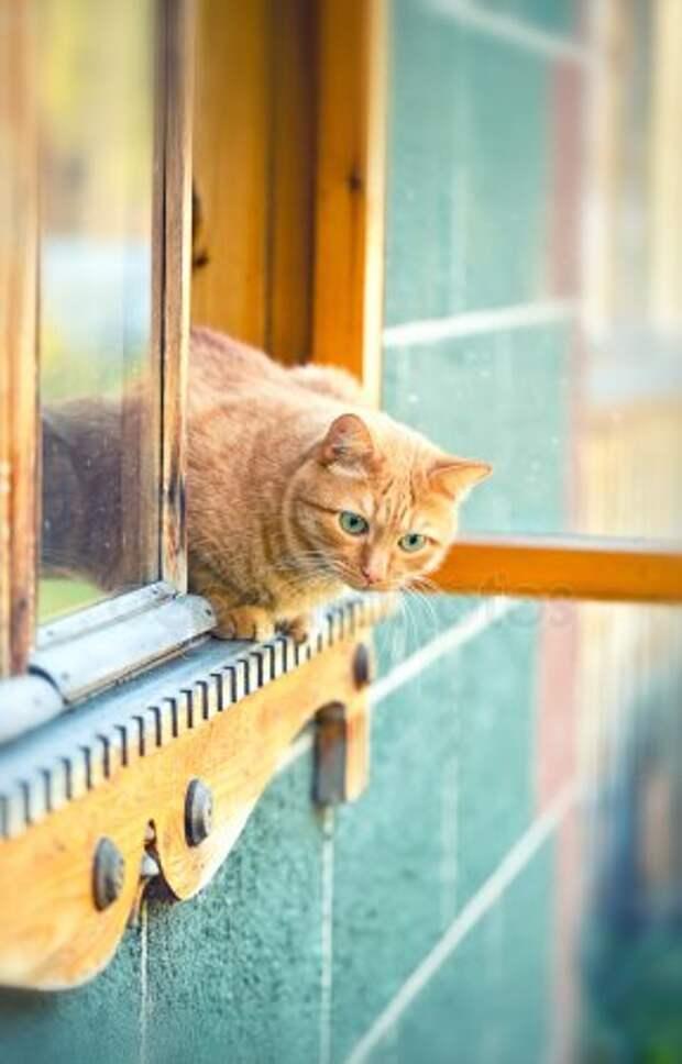 - Почему весной коты так громко орут? - Потому что кошки любят ушами!